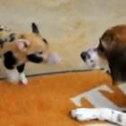 Puppy vs. Piglet