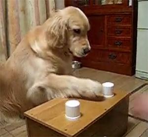 Shell Game Dog