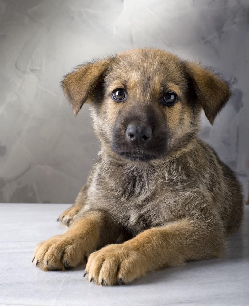 Responsible Pet Ownership: How do You Score?
