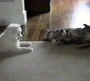 Clever Cat Teaches Dog a New Trick