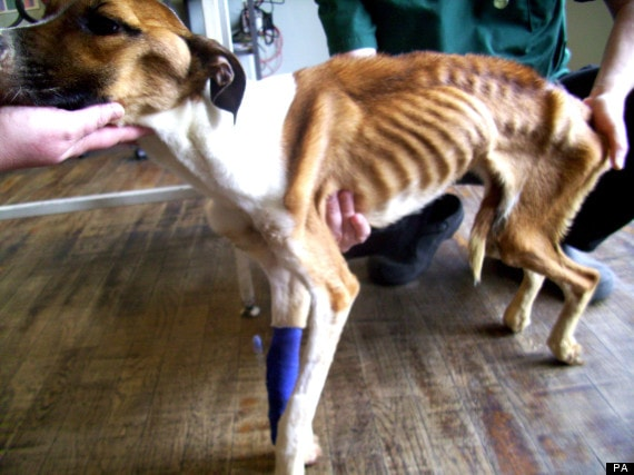 RSPCA Seeks Abuser in Horrific Starvation Case