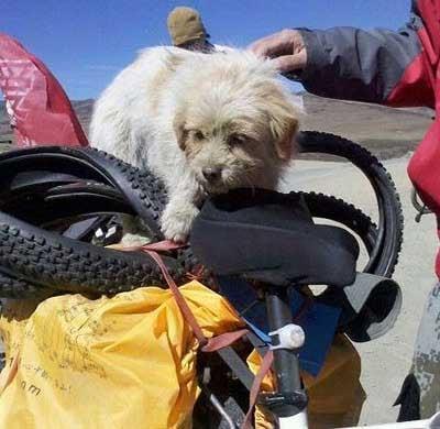 Stray Dog Runs 1,700 km Across China to Follow Rescuer
