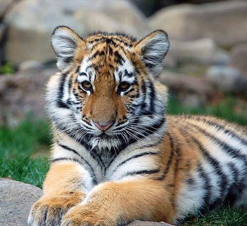Ohio House Passes Exotic Pet Ban Bill