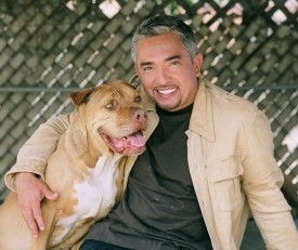 NatGeo Cancels 'Dog Whisperer'