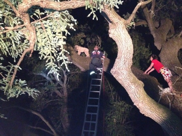 Firefighters Rescue Tree-Climbing Dog