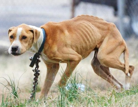 Rescuers Brave Gunfire to Save Starving Dog