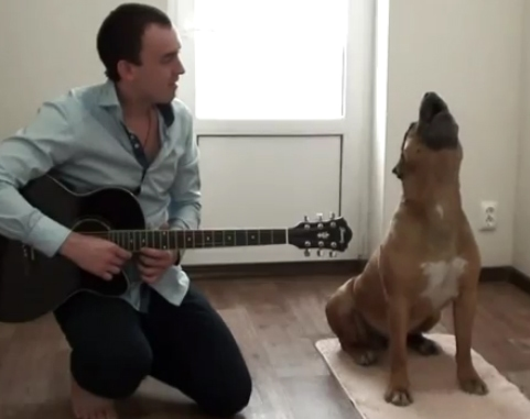 Man and Dog Start Blues Band