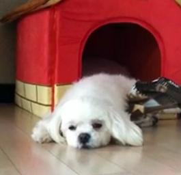 Lazy Coco