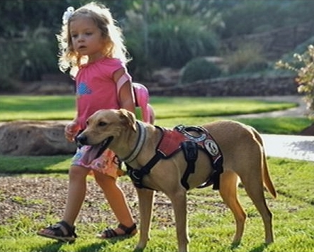 Diabetic Alert Dog Saves 3-Year-Old Girl's Life Countless Times