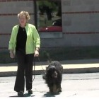 Study: Dog Walking More Beneficial than Walking with Human