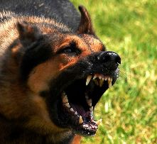 Family Dog Thwarts Home Invasion