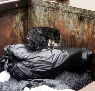 Puppy Found in Dumpster is Adopted