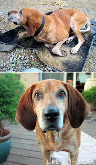 Once Trashed Dog is Treasured