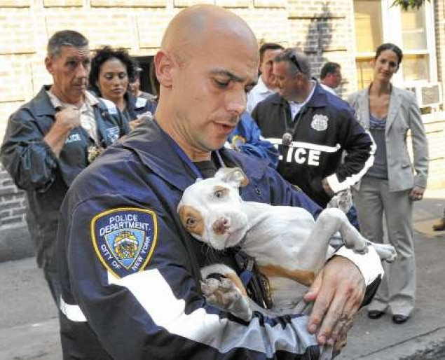 NYPD Breaks Up Brutal Bronx Dogfighting Ring