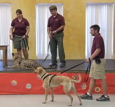 Cheetah, Dog Teach Students About Friendship