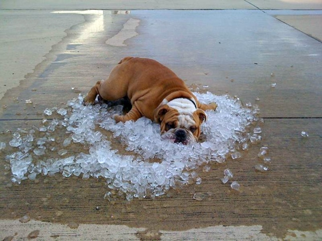 Pet Safety Tips for the Scorching Summer Season
