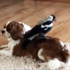 Rescued Bird Infatuated with Dog