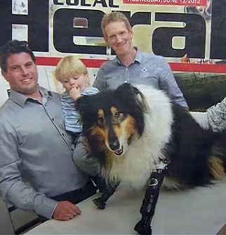 Vets Donate Prosthetic Paws to Double Amputee