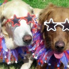 10 Pet Safety Tips for the 4th of July