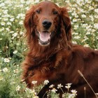 An Overview of Summer Pet Safety