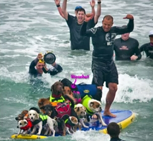 Surf Dog Ricochet Wins 1st Place at Loews Surf Contest