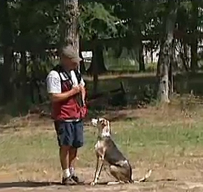 Deaf Dogs Learn Sign Language