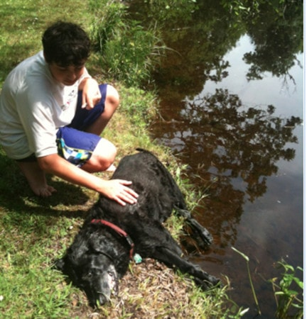13 Year Old Boy Saves Senior Dog from Drowning