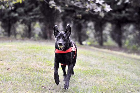 Soot has been awarded American Humane Association's Search and Rescue Dog of the Year