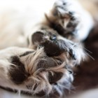 The Many Benefits of Foot Soaks for Dogs
