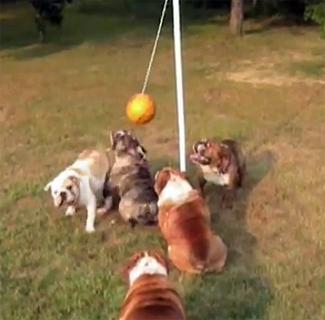 Bulldog Tetherball Tournament