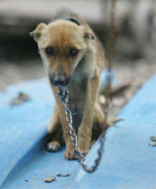 Hampton Bans Animal Tethering, Chaining