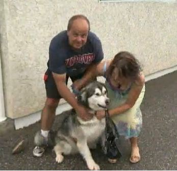 Released! Shadow the Malamute Held on Death Row Goes Home