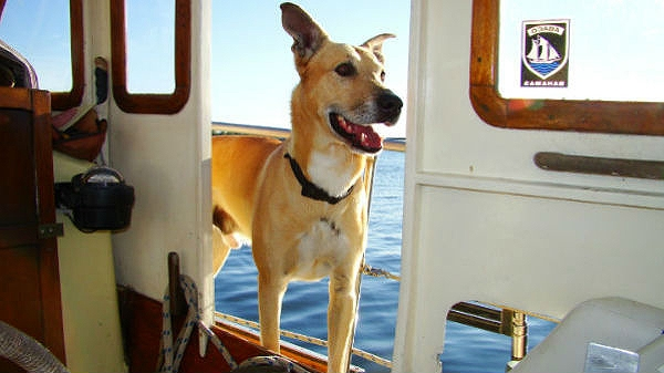 Dog Survives Three Weeks Adrift at Sea After Losing His Owner