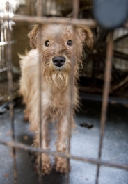 Puppy Mill Operators Banned from Owning Pets for 20 Years
