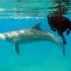 The Dolphin Dog