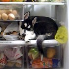The Saturday Pet Blogger Hop: Luna Loves the Fridge
