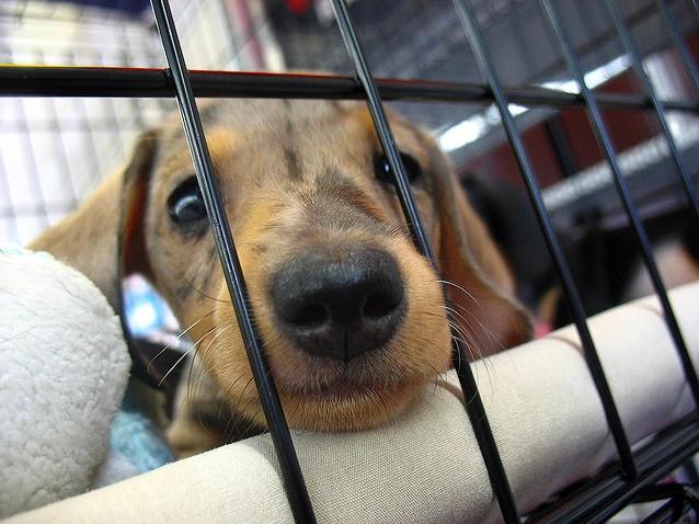 Town Council Bans Retail Pet Sales