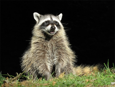 Rabies Alert: Oklahoma Confirms Cases in 34 Counties