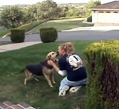 Delighted Dog Welcomes Woman Home After Three Year Separation