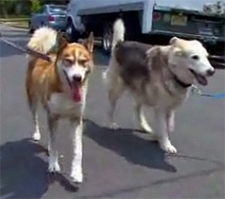 Bringing Savannah Home: Family Finds Lost Dog and New Life Mission