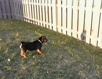 Puppy Sees His Shadow for the First Time