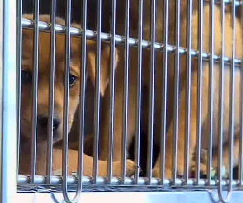 Animal Shelter Reaches Max Capacity