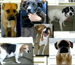 No-Kill Shelter Caught Killing Dogs in Undercover Investigation