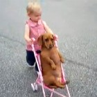 The Saturday Pet Blogger Hop: Toddler Takes Her Dachshund for a Stroll
