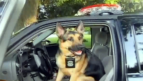 Officer Fights City for Right to Adopt Canine Partner