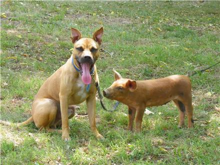 A Dog and a Pig