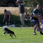 Man and His Dog On Their Way to the Record Books for Frisbee