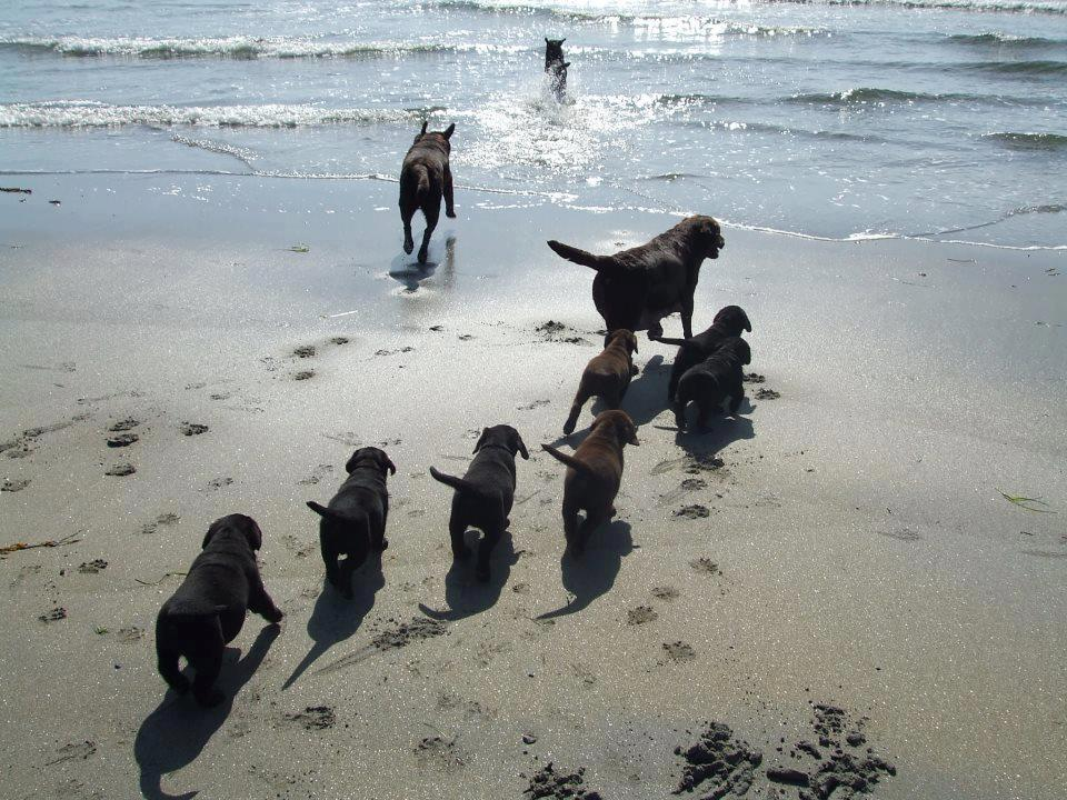 Service Dogs Let Loose On Their Day Off at the Beach