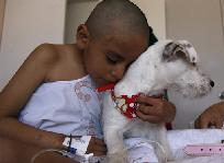Dogs Are Helping Children Get Through Cancer Treatment