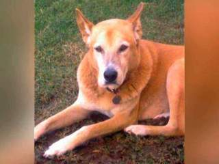 Family Devastated After Dog Mistakenly Euthanized